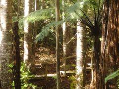 Kauri park, Warkworth by <b>follash</b> ( a Panoramio image )