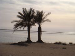 Trees on Bahrain Island by <b>abdullah nouman</b> ( a Panoramio image )