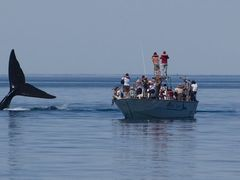 Whale watching, Valdes Peninsula by <b>David Thyberg</b> ( a Panoramio image )