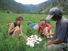 Abshir, field mushroom by <b>igor_alay</b> ( a Panoramio image )
