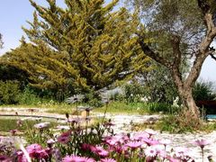 Otra vez primavera/ Once again spring by <b>Mayte Ruiz</b> ( a Panoramio image )