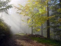 Autumn in the forest by <b>Caspar Bichsel</b> ( a Panoramio image )