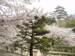 Himeji Castle by <b>PreacherCasy</b> ( a Panoramio image )