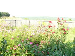 Garden of heaven by <b>maytrey</b> ( a Panoramio image )