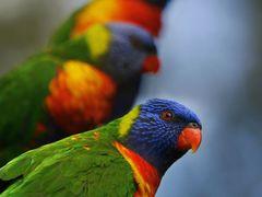 Currumbin Bird Sanctuary by <b>Nixpix</b> ( a Panoramio image )