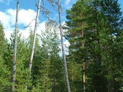Лес by <b>Lisник.</b> ( a Panoramio image )