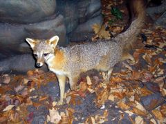 Reading Public Museum Fox by <b>Cleo McCall</b> ( a Panoramio image )