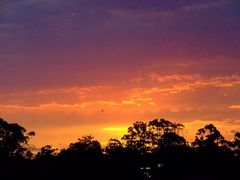 Sunset at Normanhurst by <b>EcologistGreg</b> ( a Panoramio image )