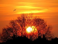 THE SUNRISE & A SEAGULL by <b>ka9894</b> ( a Panoramio image )
