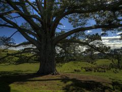 Hobbiton: The party tree close up (High Dynamic Range) by <b>GandalfTheWhite</b> ( a Panoramio image )