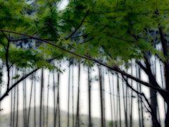 Bamboo by <b>Angelika Bentin</b> ( a Panoramio image )