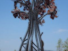 Flower by <b>Angelika Bentin</b> ( a Panoramio image )