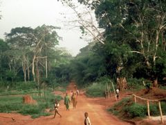 The road from Zongo to Lisala, Zaire 1988 by <b>Jack de Vries</b> ( a Panoramio image )