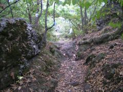 Forest near S. Nshan church by <b>ruboam</b> ( a Panoramio image )