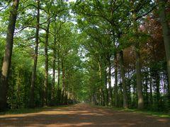 Allee du jardin du Chateau de Beloeil by <b>Yris</b> ( a Panoramio image )