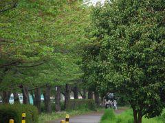Ishikawa Cyclepath by <b>Cory Malcho</b> ( a Panoramio image )