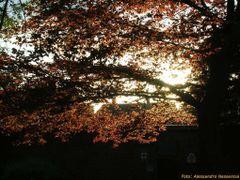 Canterbury - Westgate Gardens by <b>Alessandro Nessenzia</b> ( a Panoramio image )