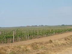 Vinogradi - Szollos by <b>GoSa</b> ( a Panoramio image )