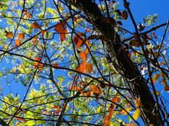 Fall Colors by <b>Dennyr</b> ( a Panoramio image )
