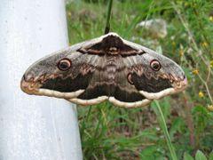Uspavani leptiri? by <b>cvijetin</b> ( a Panoramio image )
