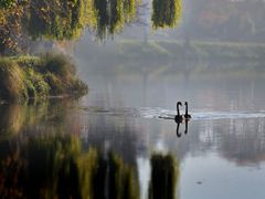 Avon River - Avonside by <b>clickNZ</b> ( a Panoramio image )
