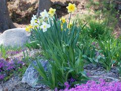 Spring by <b>Kimberly Komers</b> ( a Panoramio image )