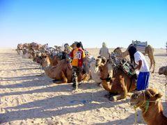 "Tunisia (Douz) ""Mai"" tevehajcsar .....""Today"" cameleer by <b>Szolnoki Istvan</b> ( a Panoramio image )"