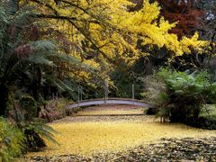 Ornamental lake at Alfred Nicholas Memorial Gardens, Sassafras by <b>Inspector H snaps</b> ( a Panoramio image )