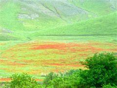 Aux environs des Portes de Tamerlan, champs de coquelicots by <b>JLMEVEL</b> ( a Panoramio image )