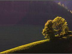 Huncut fnyek by <b>Busa Peter</b> ( a Panoramio image )