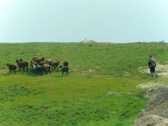 Au bord de la route A 378 de Chakhbrisak a Samarcande, berger et by <b>JLMEVEL</b> ( a Panoramio image )
