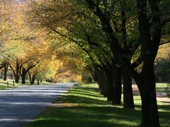 Dunrossil drive Canberra by <b>Paul Strasser</b> ( a Panoramio image )