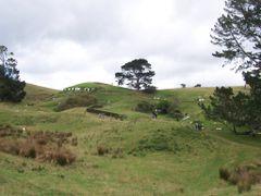 Hobbiton, aka Alexander Farm, seen from below the party tree, ne by <b>michaelhoen</b> ( a Panoramio image )