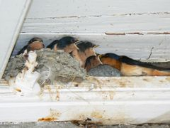 """Swallows"""" nest, Fort Rodd, Esquimalt BC July 2009 by <b>Brian B16</b> ( a Panoramio image )"""