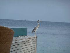 Huvafen Fushi, Maldives by <b>Nataly K</b> ( a Panoramio image )