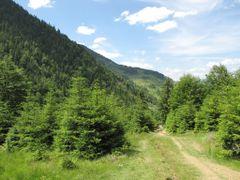 Peisaj pe traseul Cascada Cailor - cariera - C.T.Borsa by <b>gabiavram</b> ( a Panoramio image )