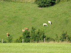 Alpine Pasture by <b>© Douglas MacGregor</b> ( a Panoramio image )