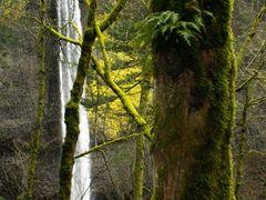 Latourell Falls by <b>Dana Jensen</b> ( a Panoramio image )