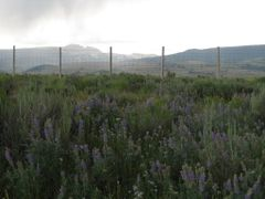 National Elk Refuge & Lupines by <b>Chris Sanfino</b> ( a Panoramio image )