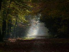 Dutch Autumn colors by <b>BertKg</b> ( a Panoramio image )