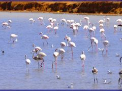 Migratory birds in Monastir-***AHMED_M_R_M*** by <b>***AHMED_M_R_M***</b> ( a Panoramio image )