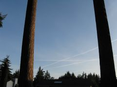 Contrails between my cousins 200 foot  Firs by <b>a3a35919</b> ( a Panoramio image )