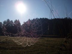 Waldnaab-roua diminetii by <b>jeanmajor</b> ( a Panoramio image )