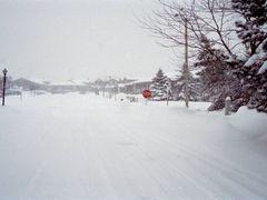 Winter - Jan 1999 by <b>sejko</b> ( a Panoramio image )