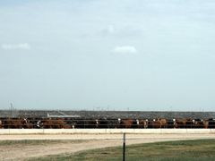 West Texas Feedlot by <b>Michael Thompson</b> ( a Panoramio image )