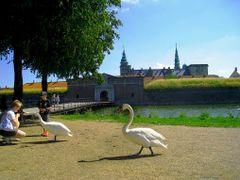"DEN Helsingoer Kronborg slot ""Hamlet Castle"" by KWOT [4598 Googl by <b>KWO Tsoumenis</b> ( a Panoramio image )"