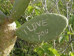 Cactus graffiti near Ggantija Temples by <b>Marilyn Whiteley</b> ( a Panoramio image )