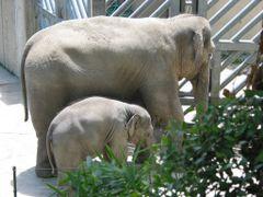 Washington Park Zoo Elephants by <b>huskey</b> ( a Panoramio image )