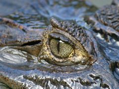Eye of the Caiman, Esquinas by <b>Huw Harlech</b> ( a Panoramio image )