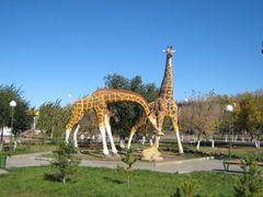 Жирафы by <b>belous</b> ( a Panoramio image )